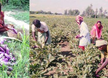 Agro-based Enterprises Change the Life Style of Mushahar Families