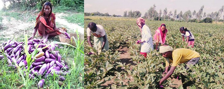 Agro-based Enterprises Change the Life Style of Mushahar Families