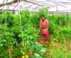 Sustainably Uplifting Poor Vulnerable Socially Excluded (PVSE)'s Prosperity through Entrepreneurship Realization (SUPPER)