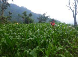 लकडाउन अनुभूति : गाउँमा सुरक्षित छौं