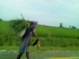 Covid-19 Crisis as an Opportunity for People Centered Land Reform in Nepal