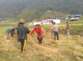 लकडाउन अनुभूती : कोरोना र कृषिमा परेको प्रभाव