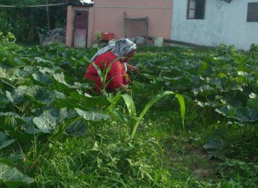 लकडाउनको सदूपयोग र कृषिको काम