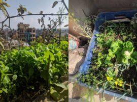 Kitchen Garden for Fresh Vegetables