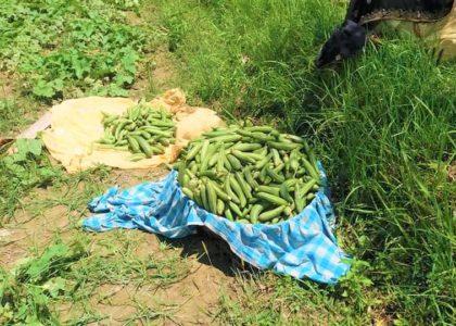 लकडाउन, कृषि उत्पादन र बजार